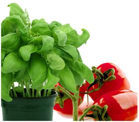 גידול ירקות בבית: כל מה שצריך לדעת
